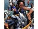 Kekayaan Laut Nusantara